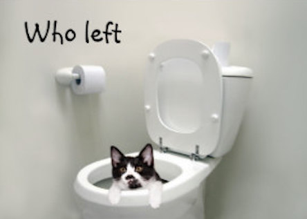 who_left_the_toilet_seat_up_card-rf34423fca156453a8e8592022f2da4cf_xvuak_8byvr_324